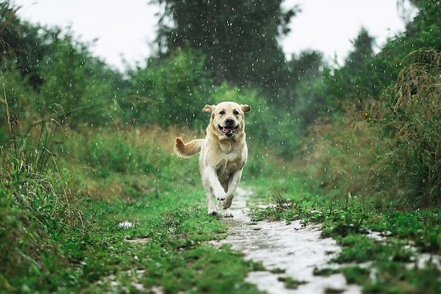 Cane divertente che gioca sotto le gocce di pioggia in campagna