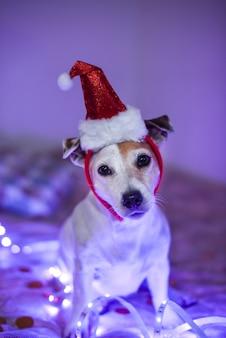 Cane divertente in un cappello da babbo natale, costume per una festa in maschera