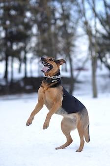 Cane divertente sulla neve