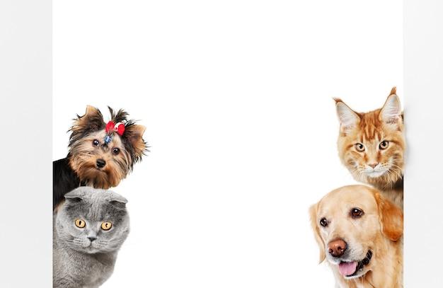 Cani e gatti divertenti isolati su bianco