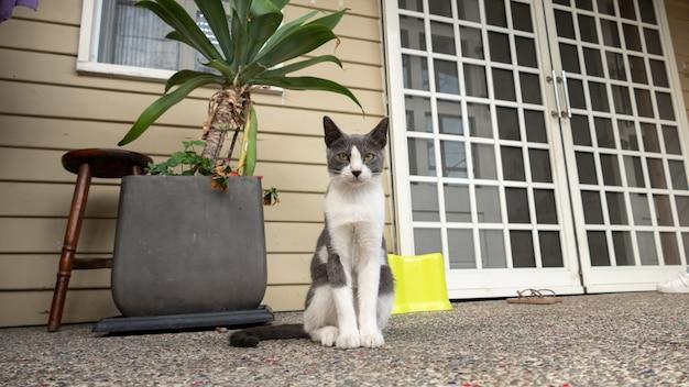 Il gatto domestico in bianco e nero divertente resta davanti alla casa