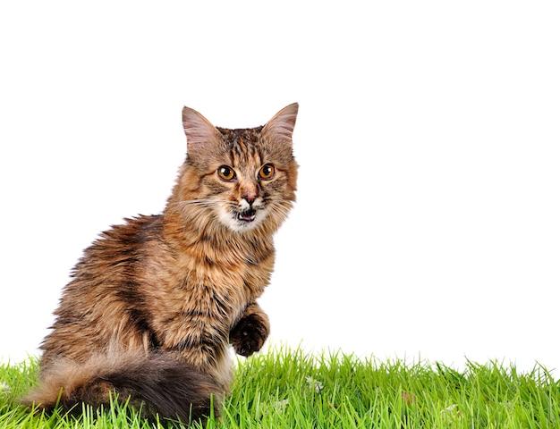 Gatto divertente del gattino sull'erba verde