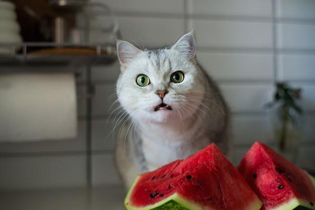 Gattino divertente che mangia anguria