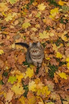 Gattino divertente in foglie di autunno gialle. gatto lanuginoso nella sosta di autunno.