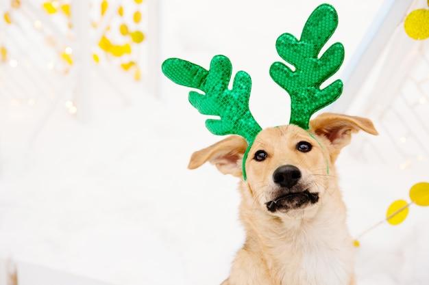 Divertente cane marrone chiaro con corna verde seduto sulla neve