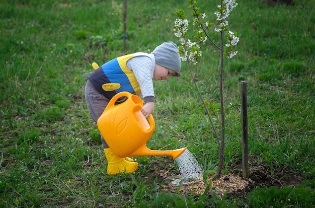 Un ragazzino divertente sta annaffiando un giovane fiore di ciliegio in un giardino primaverile da un annaffiatoio giallo