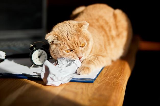 Gatto divertente e giocoso che gioca con palline di carta stropicciate sulla scrivania dell'ufficio alla luce del sole, posto di lavoro domestico.