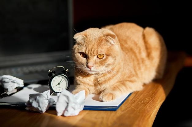 Gatto giocoso divertente sdraiato sulla scrivania in ufficio alla luce del sole, posto di lavoro a casa con foglio di carta bianco, laptop, notebook, orologio, palline di carta stropicciata e forniture.