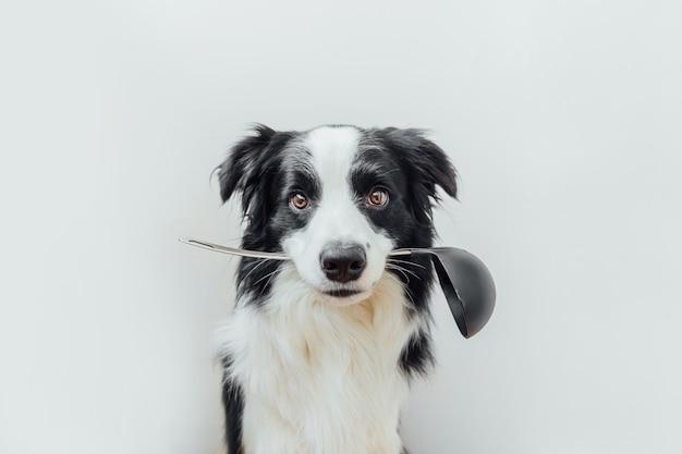 Divertente ritratto di carino cucciolo di cane border collie tenendo il cucchiaio da cucina mestolo in bocca isolato su bianco