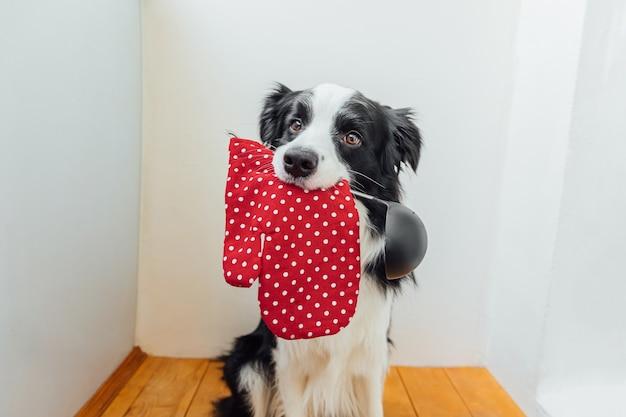 Ritratto divertente di un simpatico cucciolo di cane border collie che tiene in mano un cucchiaio da cucina siviera guanto da forno in bocca a casa al coperto. cena di cucina del cane dello chef. cibo fatto in casa, concetto di menu del ristorante. processo di cottura.