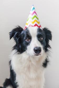 Divertente ritratto di carino sorridente cucciolo di cane border collie indossando il compleanno sciocco cappello guardando la telecamera isolata su sfondo bianco. buon concetto di festa di compleanno. vita di animali divertenti animali domestici.