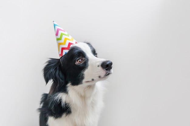Ritratto divertente del cappello sciocco d'uso sorridente di compleanno del cucciolo di cane border collie sorridente sveglio che esamina macchina fotografica isolata sulla parete bianca. concetto di festa di buon compleanno animali divertenti animali domestici.