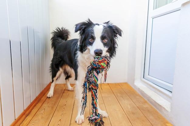 Divertente ritratto di carino sorridente cucciolo di cane border collie