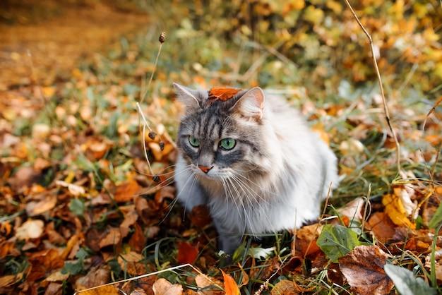 Divertente ritratto di un soffice gatto grigio con gli occhi verdi, all'aperto nella foresta.
