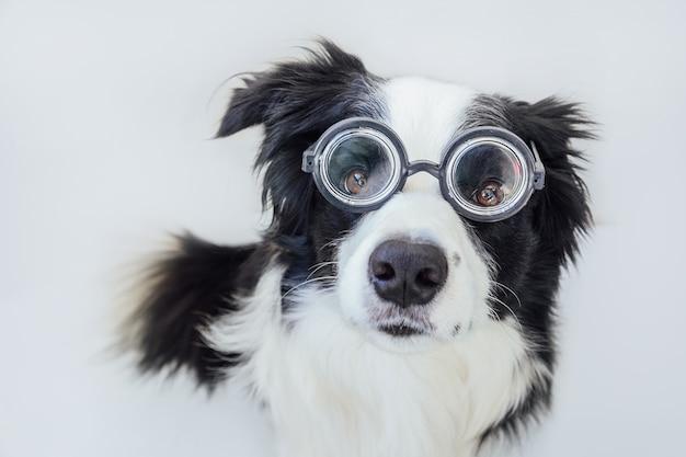 Divertente ritratto di cucciolo di cane border collie in comici occhiali isolati su sfondo bianco.