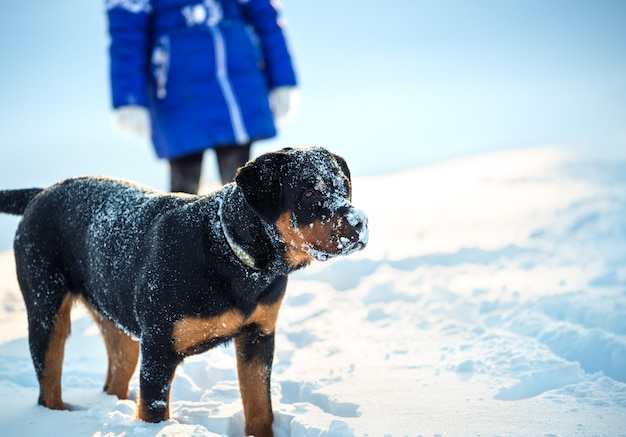 Il giovane cane positivo divertente gioca con gioia in campagna in una gelida giornata di sole