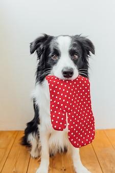 Funny cucciolo di cane border collie tenendo la cucina presina, guanto da forno in bocca su sfondo bianco
