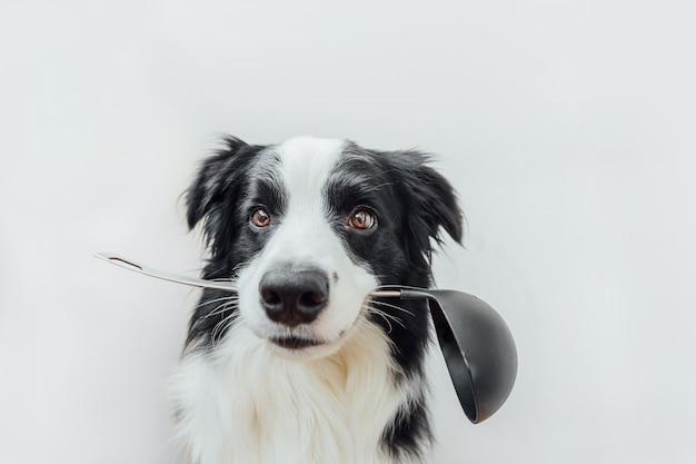 Divertente cucciolo di cane border collie tenendo il cucchiaio da cucina mestolo in bocca isolato