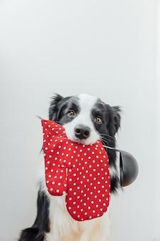 Divertente cucciolo di cane border collie con cucchiaio da cucina mestolo presina in bocca