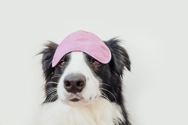 Divertente cucciolo di cane border collie con dormire maschera per gli occhi isolati su sfondo bianco
