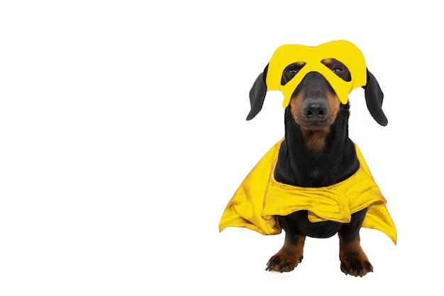 Cucciolo di cane divertente vestito da super eroe per il carnevale o halloween. isolato.