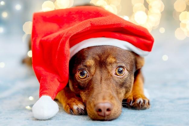 Cucciolo divertente in cappello rosso della santa
