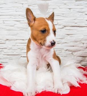 Divertente cucciolo di cane basenji rosso è seduto in piume bianche, biglietto di auguri