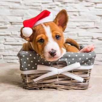Cucciolo di cane basenji rosso divertente in cappello della santa a natale e capodanno nel cestino
