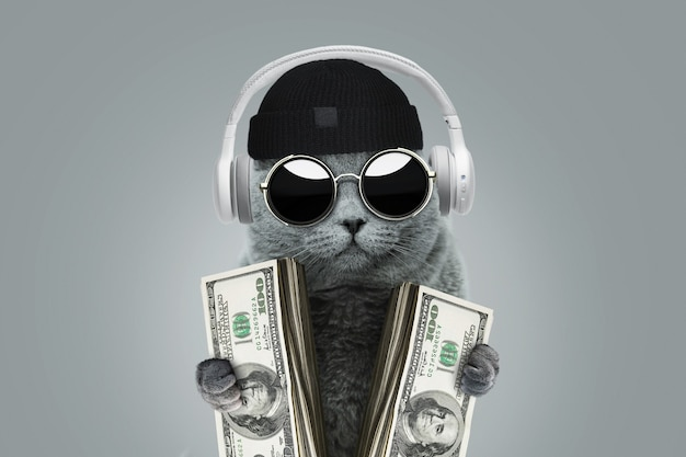 Divertente gatto capo ricco con occhiali di protezione solare, cappello e cuffie tiene in mano dollari in contanti. idea di concetto di affari e investimento. vincere al casinò