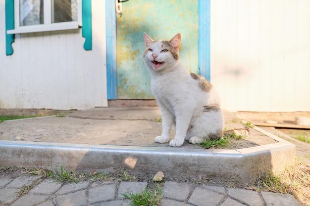 Gatto rurale divertente che si siede vicino alla porta e miagolare