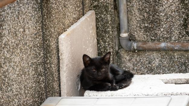 Divertente gatto bianco e nero randagio in strada
