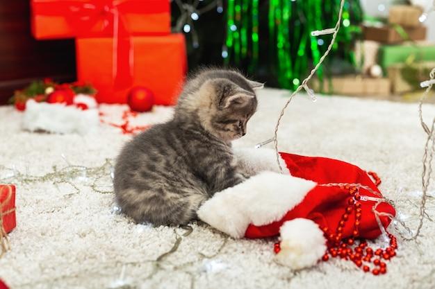 Il simpatico gattino tabby gioca con il cappello di babbo natale rosso e le luci natalizie