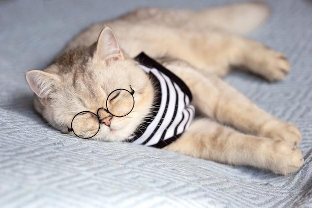 Il gatto bianco divertente dorme su una coperta