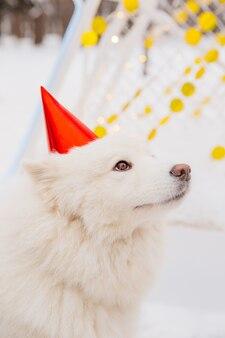 Divertente cane bianco in berretto rosso seduto sulla neve nella foresta