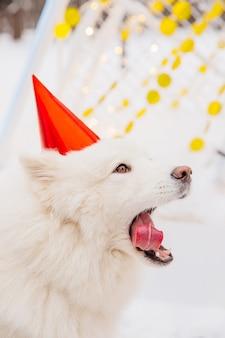 Divertente cane bianco con la bocca aperta in berretto rosso seduto sulla neve nella foresta