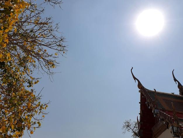 Apice del timpano e tetto cappella tailandese con foglie dorate di bodhi tree sul cielo con lo sfondo del sole