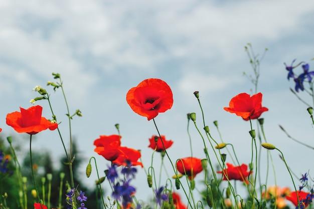 I fiori del giardino si chiudono. salvaschermo, sfondi per il desktop