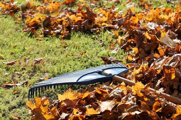 Il rastrello per foglie da giardino è sull'erba tra le foglie d'acero