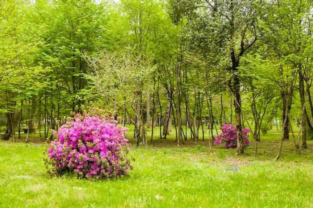 Giardino e parco, giardino botanico zugdidi in georgia. giardino primaverile.