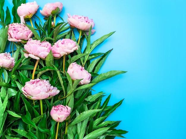Le peonie rosa da giardino con fogliame verde brillante si trovano su uno sfondo blu