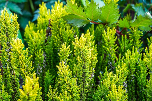 Pianta da giardino e illuminazione bokeh con sfondo verde della natura.