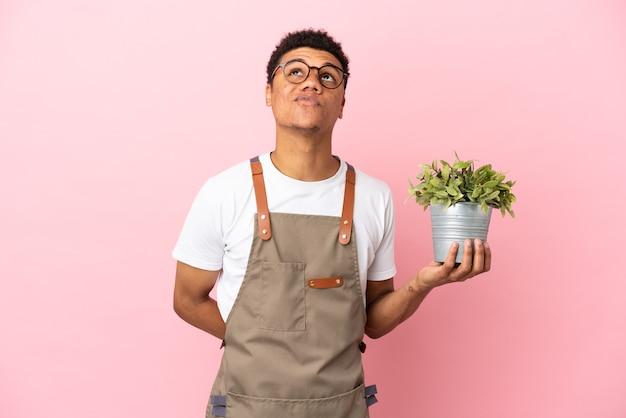 Giardiniere africano che tiene una pianta isolata su sfondo rosa e alza lo sguardo