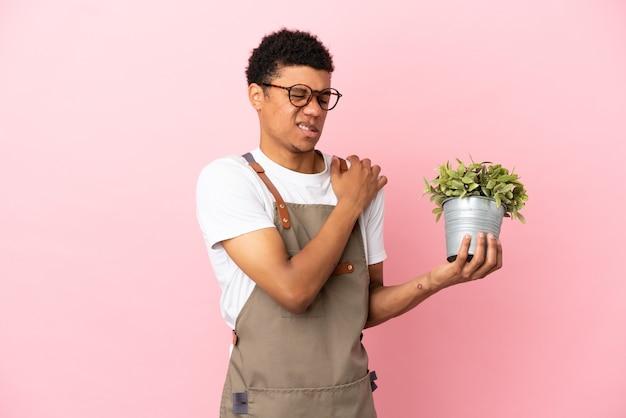 Giardiniere africano che tiene una pianta isolata su sfondo rosa che soffre di dolore alla spalla per aver fatto uno sforzo