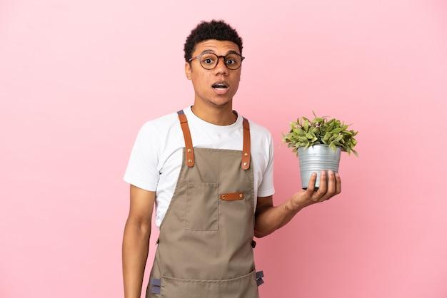 Giardiniere africano che tiene una pianta isolata su sfondo rosa con espressione facciale a sorpresa