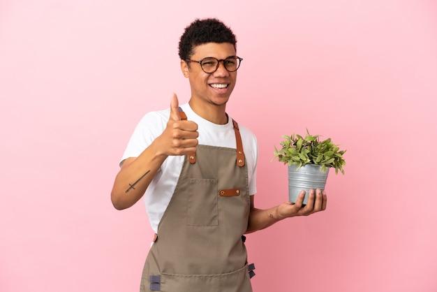 Giardiniere africano che tiene una pianta isolata su sfondo rosa con il pollice in alto perché è successo qualcosa di buono