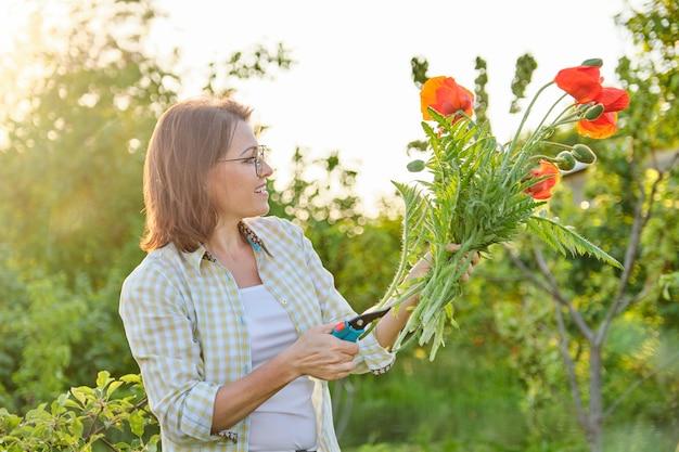 Giardiniere che taglia papaveri fiori rossi con cesoie da giardino