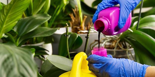Giardiniere fertilizzante casa piante di orchidee. cura delle piante d'appartamento. donna che innaffia i fiori dell'orchidea. , lavori domestici e concetto di cura delle piante. giardinaggio domestico, amore per le piante e cura
