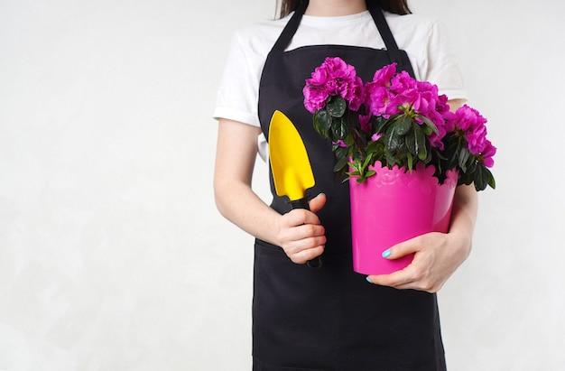 Giardiniere che tiene una piccola pala da giardino e un vaso di fiori con azalea rosa nelle sue mani. sfondo con copia spazio.