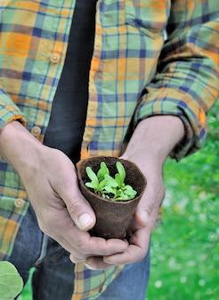 Giardiniere che tiene il vaso della piantina in giardino