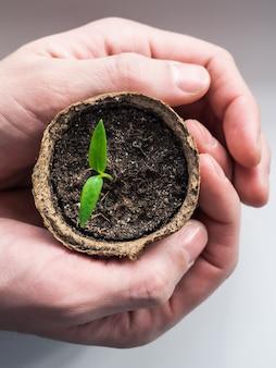 Il giardiniere tiene in mano una giovane pianta. una pianta fragile nelle mani di un uomo.